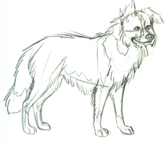 Border Collie sketch by ANBU-Flashez