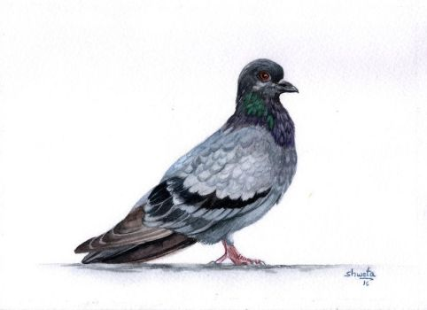 Rock Pigeon by aakritiarts
