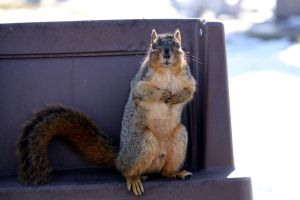 Squirrel 4 by candy691977