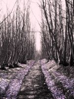blossomed bridleway by tomaplaw