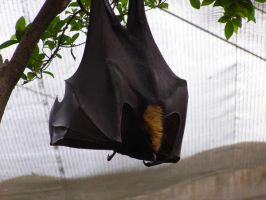 Bat by mcculle6