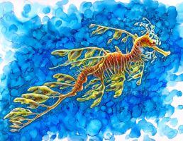 Leafy Seadragon by johannachambers