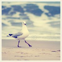 May I Have This Dance... by tracieteephotography