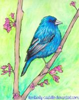 Indigo Bunting by kimberly-castello