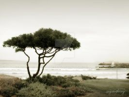 A lonely tree by SAYN0THING