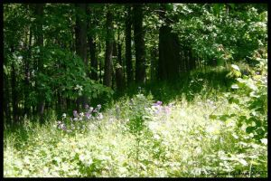 forest glade in summer by Nariane