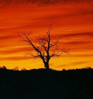 Flaming Silhouette by SunOwl