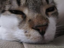 Kitty Nose by Spethul