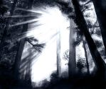 The Forest Light by ladyashara