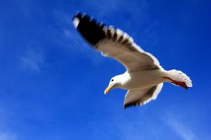 Seagull by Pixelcoma