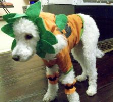 Peppi dont want to be a pumpkin by Prepare-Your-Bladder