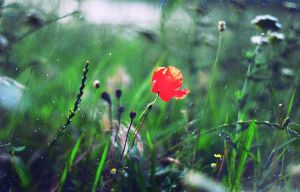 flower143 by aimpss