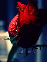 Red .. by ImaGinatio-N