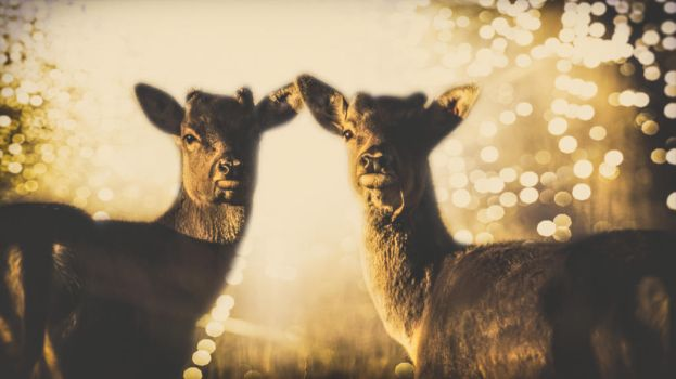 Deers by Atroksia-Photography