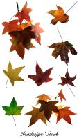 Autumn Leaves - Pack 2 by Inadesign-Stock