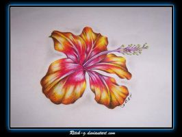 Hibiscus Drawing by ritch-g