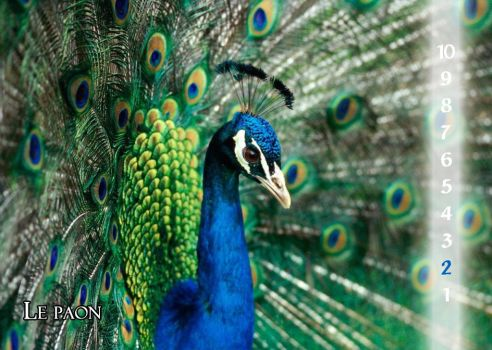 30 - The peacock by Varagh