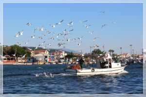 fishing boats and seagulls by firxxx