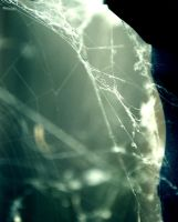 Spider Web 7 by MegBethany