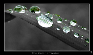 The Color of Water. by P5yR3ap3r