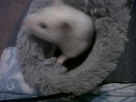 My hamster Snowball in a boot by Londonexpofan