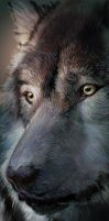 Wolf Head by Hagge