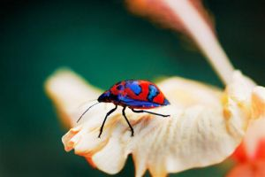 coleoptera by Chacalxxx