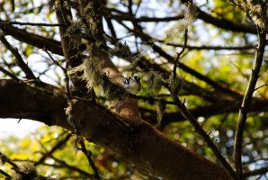 Black-and-white Warbler XI. by swampliquor