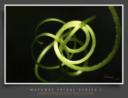 Spiral-Series8 by dhead