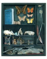 Cabinet of Curiosities by PaperSpiders