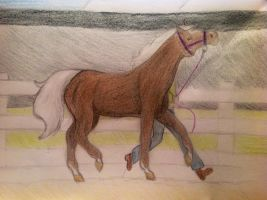 VLS Autumn colours show entry by Flyingfetlocks