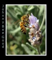 Johnny Bee Good by FireflyPhotosAust