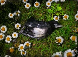 The dream of a dead bird by IMAGENES-IMPERFECTAS