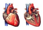 Anatomy of the Heart by JoaRosa