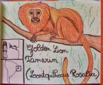 Golden Lion Tamarin - Animal of November 14 by MoonyMina