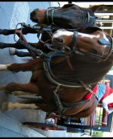 Horse and Cart by Pianochick66