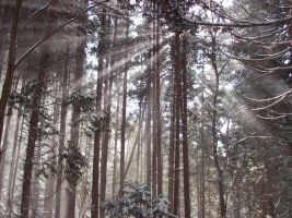 Sunlight Through the Pines by I-Artemis-I