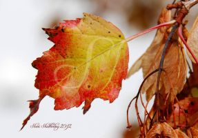 Fall Has Come Again... by Scooby777