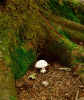 The Lonely Little Mushroom by Forestina-Fotos