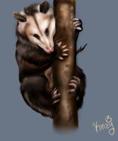 Opossum by KahlaWolf