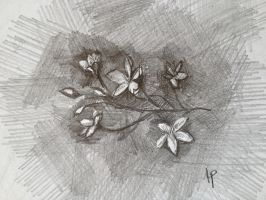 StarFlowers.Pencil.Sketh by VLStone