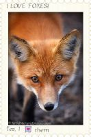 ~Stamp~ I LOVE foxes by swiftshadow64