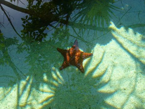 Seastar in a small lagoon by NathanTheThird