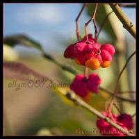 Red and Orange Berries by allym007