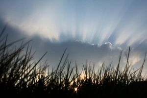 Grass and Sky by scotto