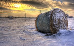 Winter Grass by d67