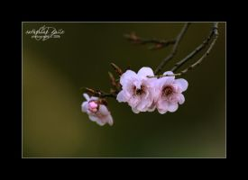 a new spring.. by cdaile