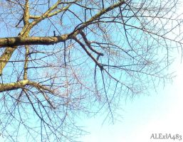 under the branches by ALExIA483