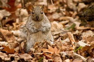 Funny squirrel by RinFlorin