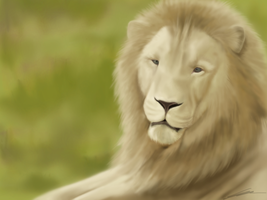 White Lion by Tawned